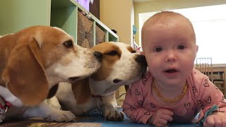 Trying to Teach Baby Sister How to Feed Dogs And Other Cute Moments
