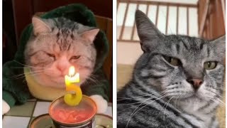 Funny Cats Compilation 2020 #3