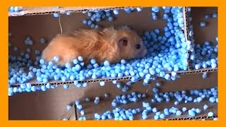Funny Hamsters – My Hamster in Amazing Maze with beads BEANBAG