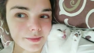 Funny Tiny kitten sneezed at me 🐱🥰 Too CUTE