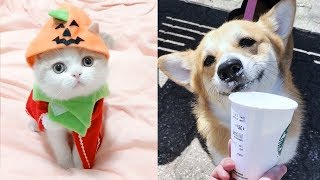 💗OMG! – Funny and Cute Dog and Cat Compilation 2020💗 #44 – CuteVN
