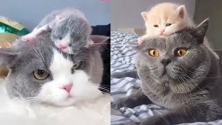 😍 Mother Cat And Kittens 🐱 Funny and Cute Cats Compilation 2020 – CuteVN