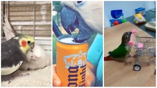 Funny & Cute Parrot moments – Parrot videos #1