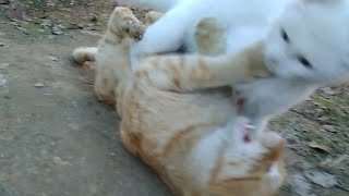 Katy The Great Wrestler 🐾😻 | Cat and  kitten playing | Funny cat videos | Top 1 in everything