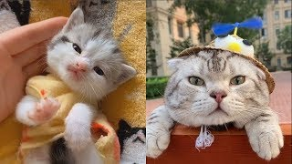 💗Aww – Funny and Cute Cats Compilation 2019💗 #24 – CuteVN