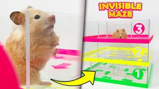 Hamsters vs Invisible Maze | Transparent maze for hamsters