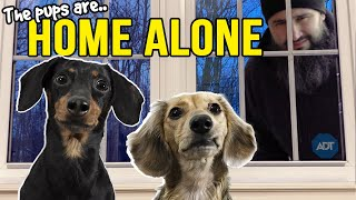 Ep#13: The Dogs are HOME ALONE – then Puppy Burglar Arrives! 😲