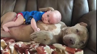 Cute Dogs Babysitting Babies Video Compilation