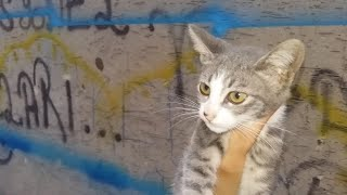 Stray Cats Eating Wet Cat Food  (Cute Cats – Cute Kittens)