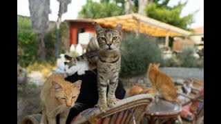 Cute Cats at Cat rescue samos