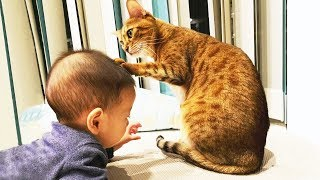 Cute Cats Annoying Babies – Best Cats And Baby Videos