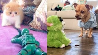 Cat & Dog Reaction to Playing Toy – Funny Cat & Dog Toy Reaction Compilation | Cute VN