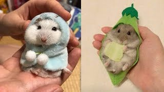 😍 Cute is Not Enough 🤣 Cutest Hamster In The World 2020 | Funky Pets
