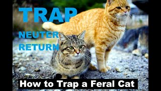 How to Trap a Feral Cat   Trapping Feral Cats   Kittens rescue   Kitty TNR Trap catch youtube VIDEO