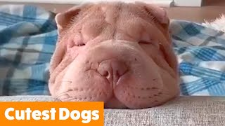 Adorable Funny Dogs | Funny Pet Videos