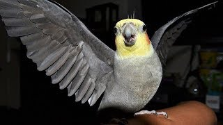 FUNNY Birds Doing FUNNY & Outstanding humorous thing ! Funny And Cute Birds Show