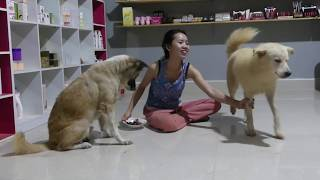 LOVELY SMART GIRL PLAYING BABY CUTE DOGS AT HOME HOW TO PLAY WITH DOG & FEED BABY DOGS #103