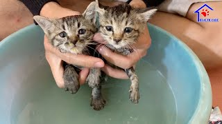 First Lovely Bath for 2 Abandoned kittens after rescue!