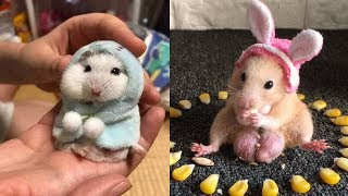 💗 Aww – Funny and Cute Hamster Compilation 2020 🐭#1- CuteVN Animal