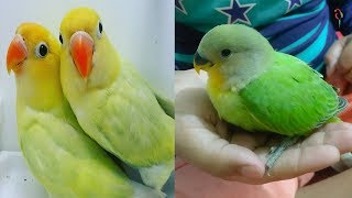 Super Cute And Funny Parrots – Cutest & Naughty Pet Birds In The World