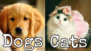Cute Cats And Dogs 🐶 Kittens 😻 Funny Animals