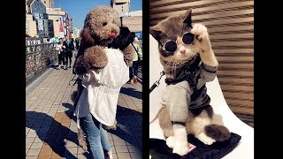Cute dogs and cats doing funny things | Cute Pets Vines complication |  Lovely Pets vines