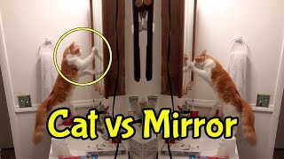 Cat Fighting With Reflection & Cute Cats Grooming Each Other