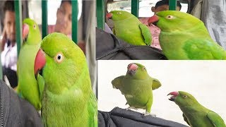 Parrot Talking & Dancing | Funny Birds Sing, Dance, Sound | Funny Parrot Video | Cute Two Parrot |