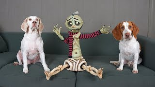 Zombie Boy & Cute Dogs Play: Funny Dogs Maymo & Potpie