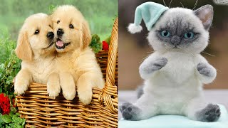 Baby Animals 🔴 Funny Cats and Dogs Videos Compilation (2020) – part 8