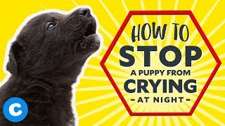 How to Stop a Puppy From Crying at Night