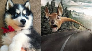 45 Real Funny Dog Videos For Dog Lovers – 2020 | Dog Lovers Club