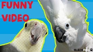 Try Not To Laugh Challenge –  BEST FUNNY PARROTS COMPILATION