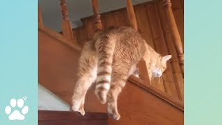 Cats Struggling With Life | Funny Cat Videos