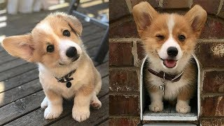Cutest Puppies Ever In The World – Cutest Dogs Funny Videos | Cute Dogs Funny Moments | Puppies TV