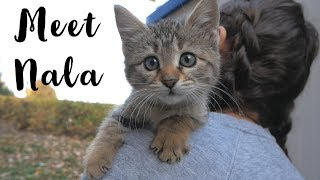 Cute Baby Kitten With Her Mom Live On The Streets