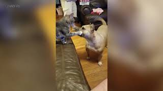 Bully Cats 😜🐱 Funny Cats Part 2 Funny Pets
