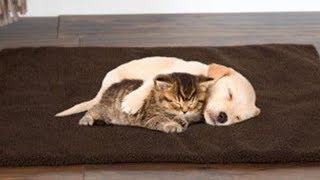 Cute Puppies And Kittens – Baby Animals 🔴 Funny Cats And Dogs Videos Compilation 2020 | Puppies TV