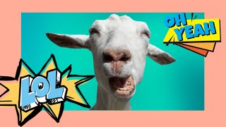 FUNNY CATS, FUNNY BIRDS, FUNNY DOGS, FUNNY GOATS!! CRAZY VIDEOS