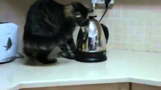 10 Crazy and Funny Cats in Action (Compilation)