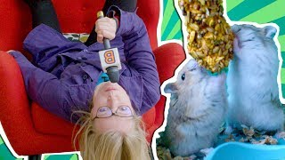 Funny Hamsters On Why They Are SO Cute | Roving Reporter | Animal Talk