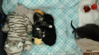 Tiny Kittens Time lapsed video of late night surprise kittens sleeping first night at TKHQ 6 29 2017