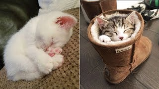 😍 Too Cute Too Funny 🤣 Cute Dogs and Cats Doing Funny Things #4 – Cute Zone Video 2020