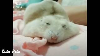 Cute And Funny Baby Hamsters  Funniest Hamster Video Compilation 2020 – Cute Pets