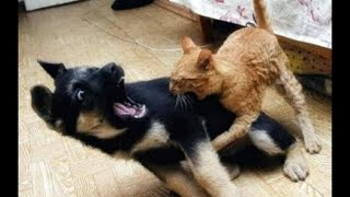 Aww Cute Cats And Dogs 😻 Funny Pets Compilation – Cute Animals Video 2020