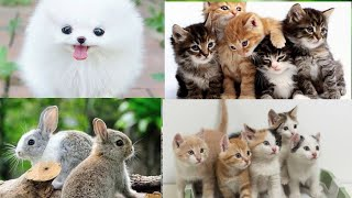 Cute Puppies, Dogs,love birds & funny cat Babies Playing with rabbits || Akira Talks