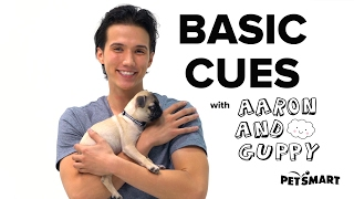 PetSmart Puppy Training: Basic Cues