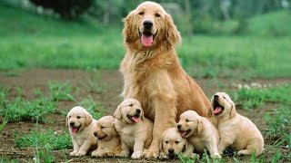 Cutest Puppies! Mother Dogs and Cute Puppies Videos Compilation, Cute moment of Puppy #3