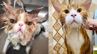 💗 Cat's Reaction To Bathing 🐱 Funny and Cute Cats Compilation 2020 – CuteVN