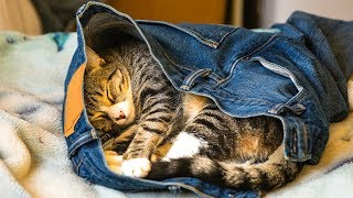 Cat Stealing Clothes Compilation Funny Cat Videos (2019)